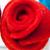 Una persona mayor, una rosa